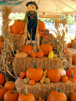 Pumpkin Patches And Fun In The Sacramento Area This Month