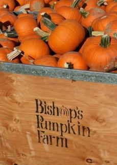 Bishops-Pumpkin-Farm