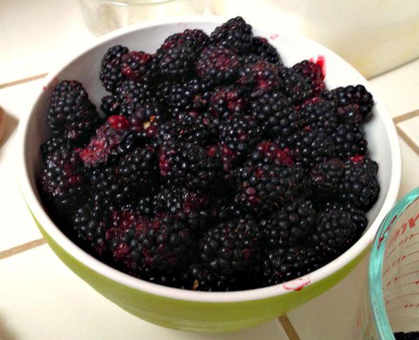 Berry Picking 4