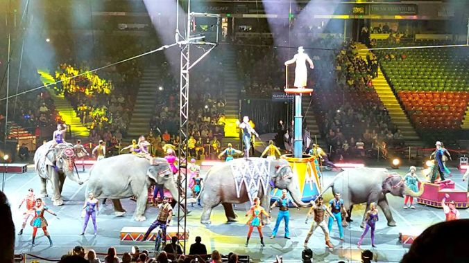 Elephants at the Circus