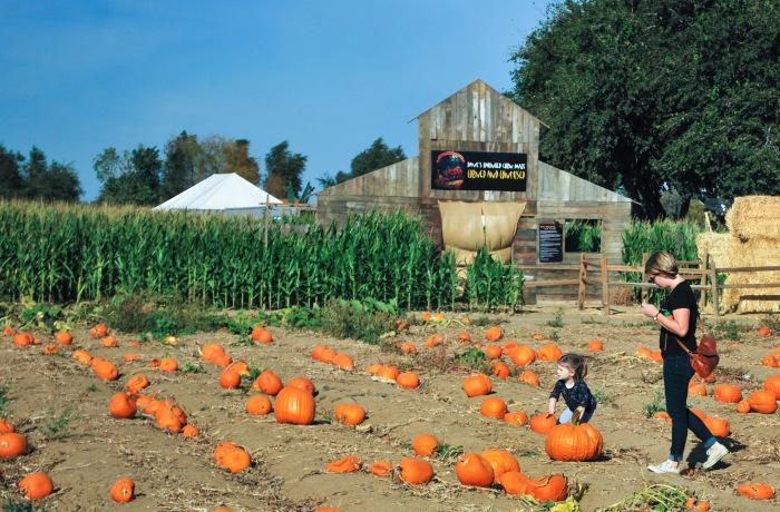 pumpkin-patch-06